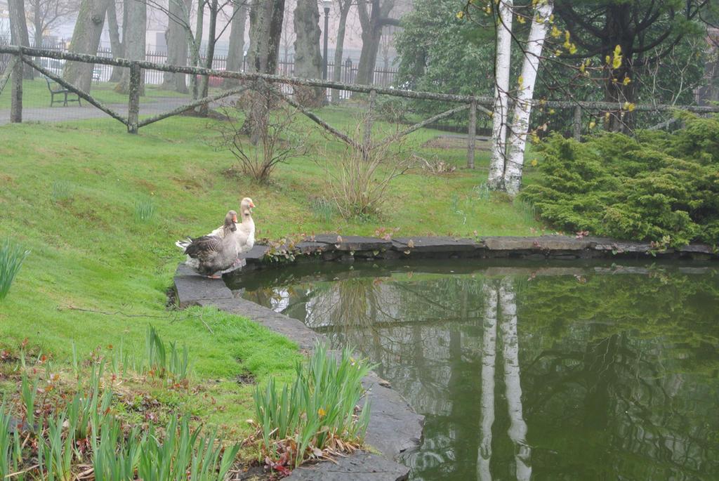 Victorian Garden Geese - Halifax Public Gardens by ShawnaMac on ...