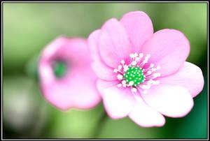 Pink Easter ! by Omoidenoki