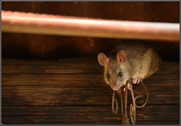 Ratatouille... by Omoidenoki