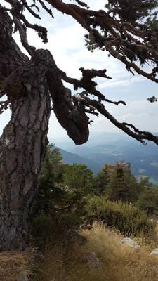 Under the pine...