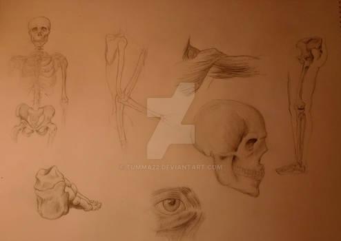 human anatomy study #1