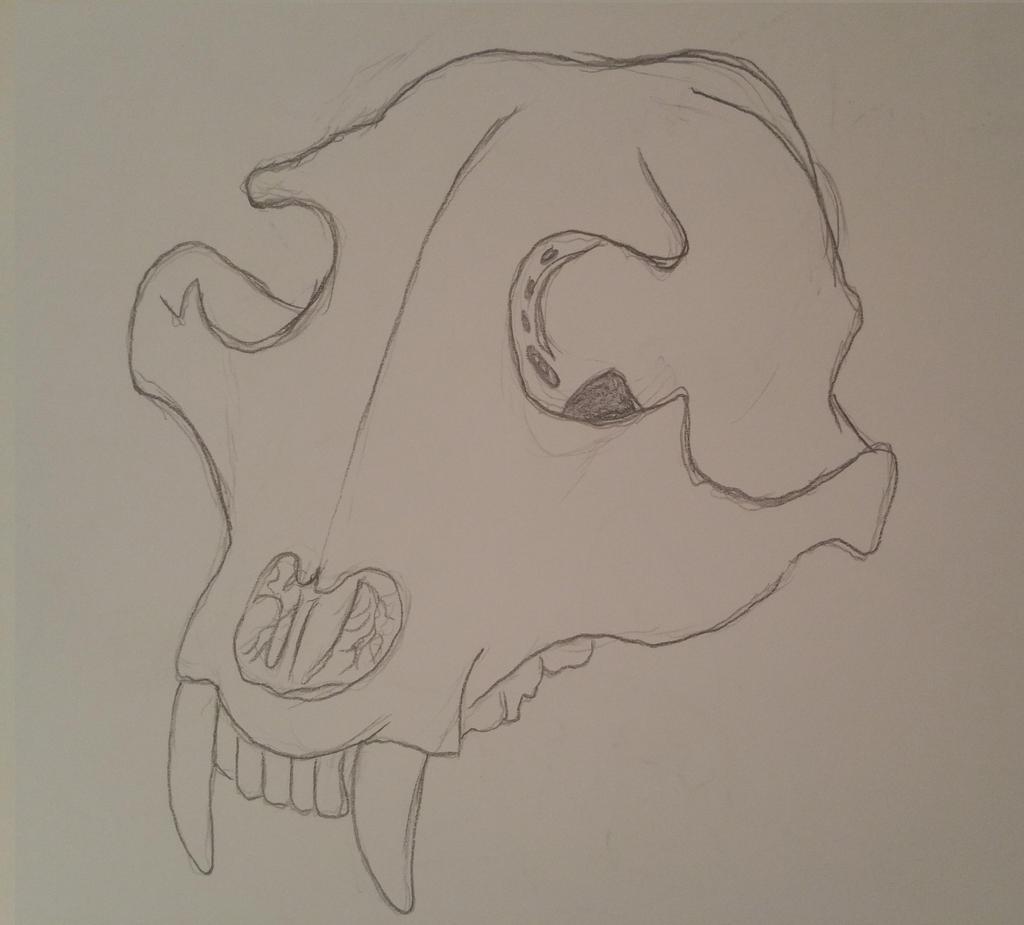 Black Bear Skull by GECKO-Nuzlockes