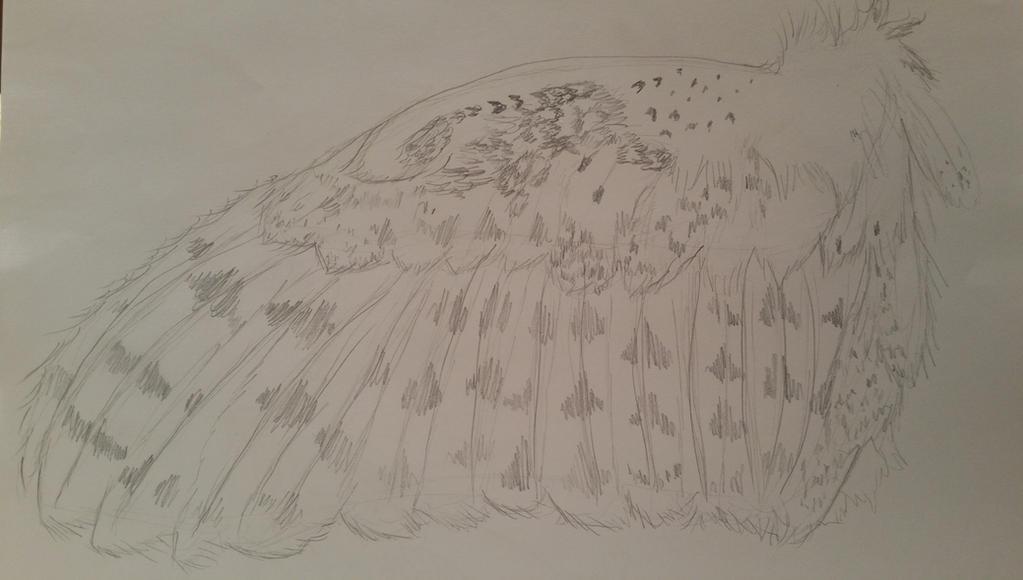 Barn Owl Wing by GECKO-Nuzlockes