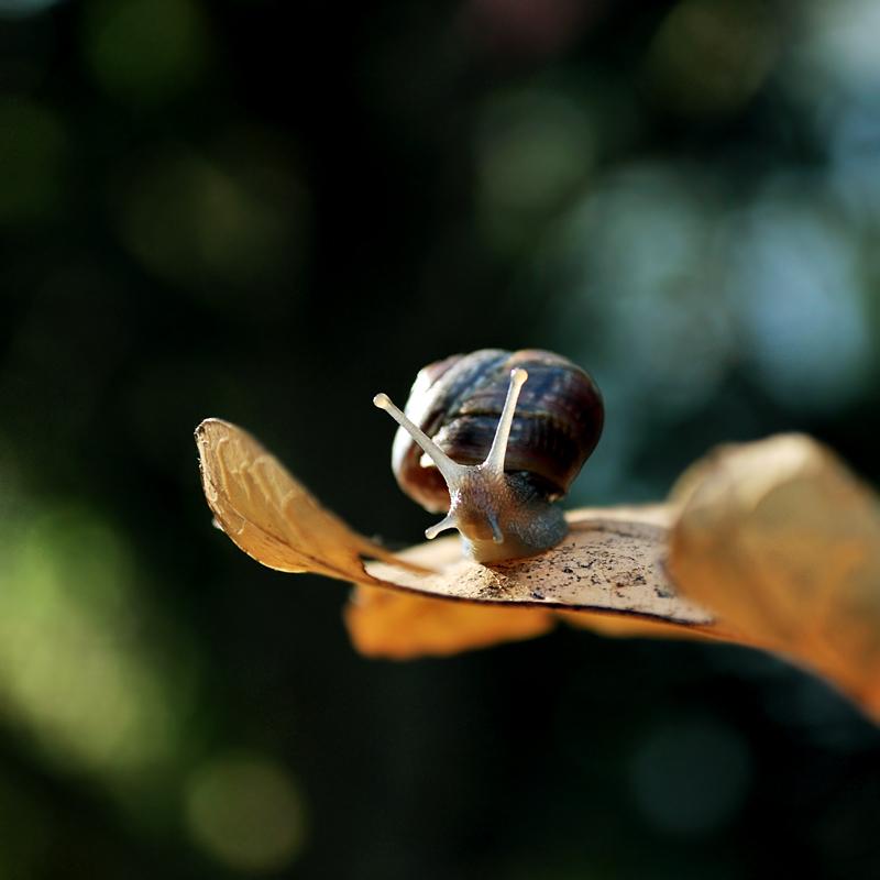 Autumn delight by Justysiak