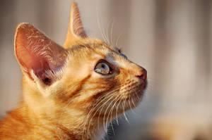 Kitten I by Justysiak