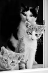 We're watching you! by Justysiak