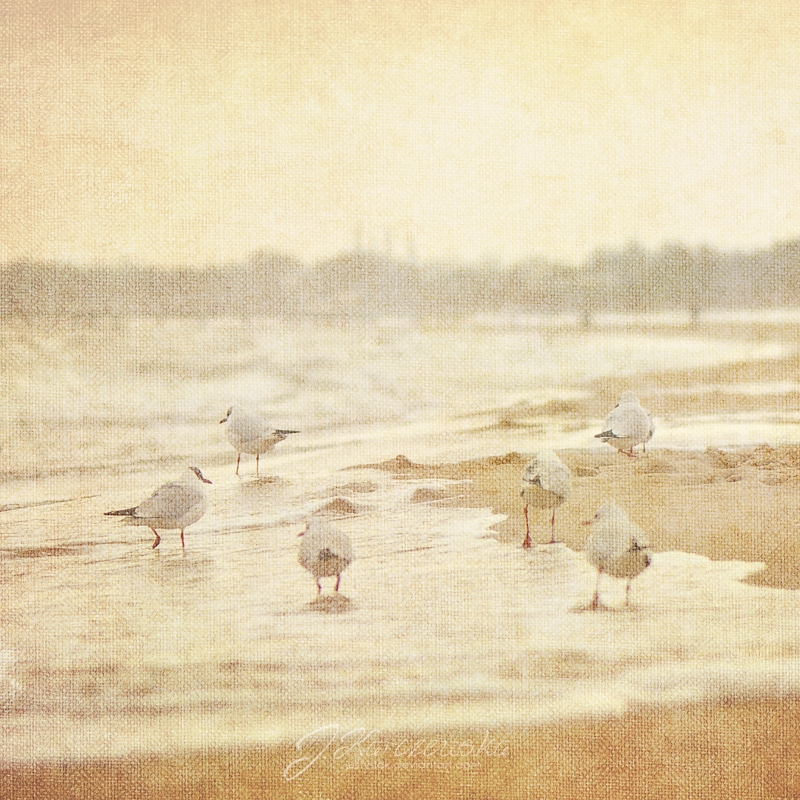 Seagulls IV by Justysiak