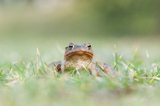 Toad IV