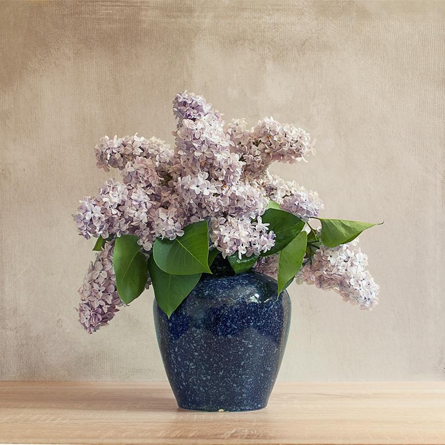 Lilac II by Justysiak