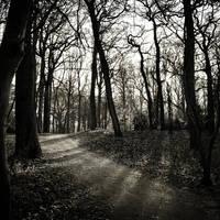 Winter Light III by ArjenCalter
