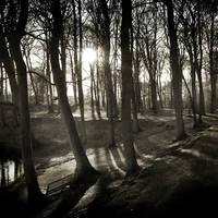 Winter Light IV by ArjenCalter