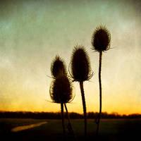 Power Flower by ArjenCalter