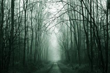 Misty Morning by ArjenCalter