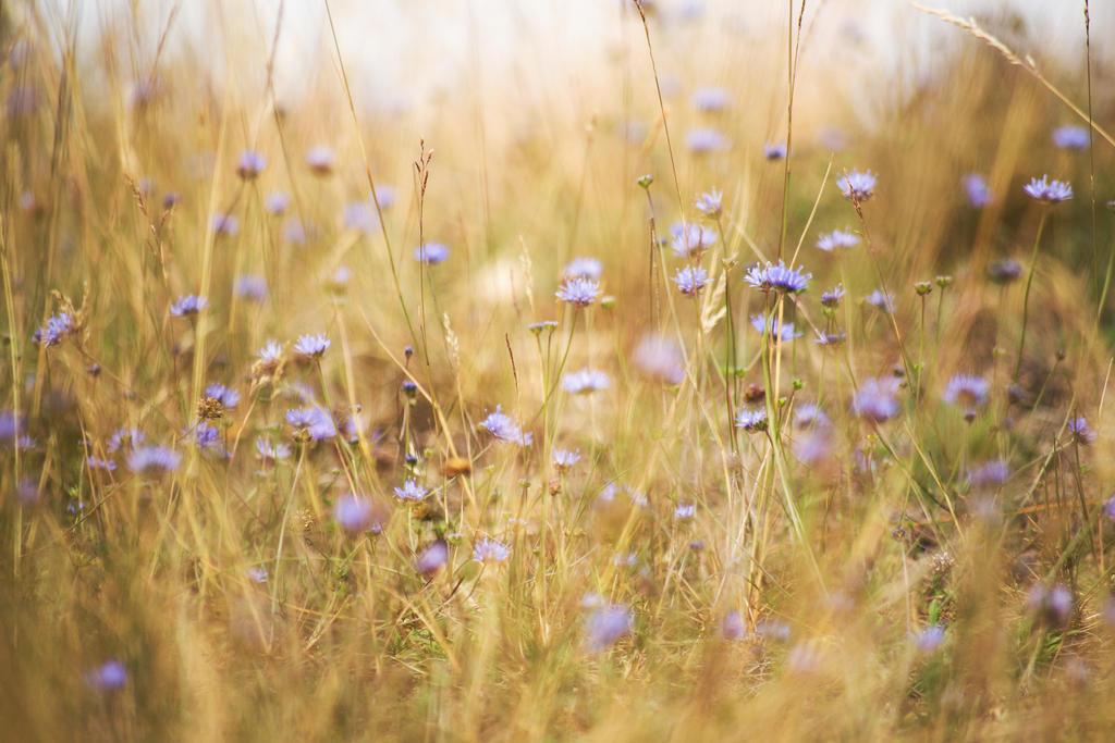 Purple Souls by ArjenCalter