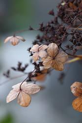Blue autumn by meganjoy