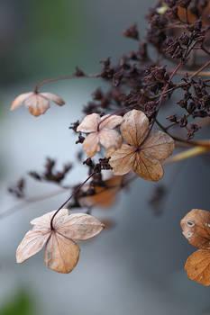 Blue autumn