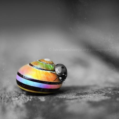 Colorful home by lieveheersbeestje