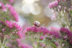 Snails garden by meganjoy