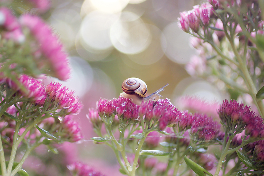 Snails garden by lieveheersbeestje