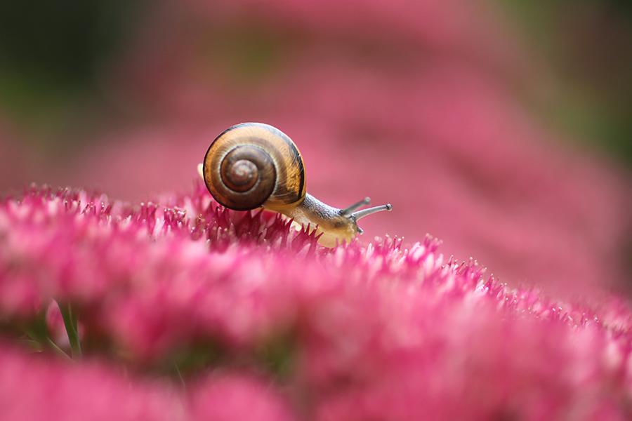 In pink by lieveheersbeestje