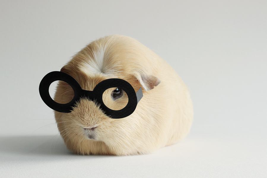 Booboo Potter by lieveheersbeestje