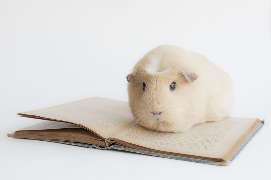 Studying is hard by lieveheersbeestje