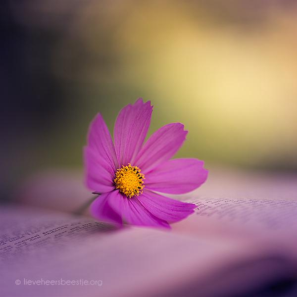 موسوعة خلفيات للتصميم لاحلى منتدى flowers_and_silence_