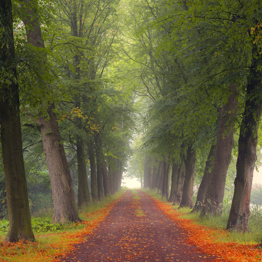 Endless road by lieveheersbeestje