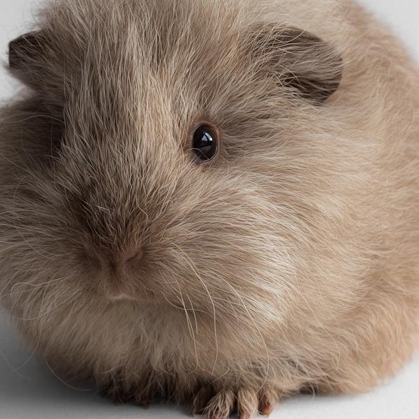 Guinea pig Sookie by lieveheersbeestje