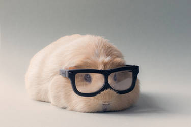 Professor Booboo