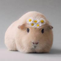 A daisy a day by meganjoy
