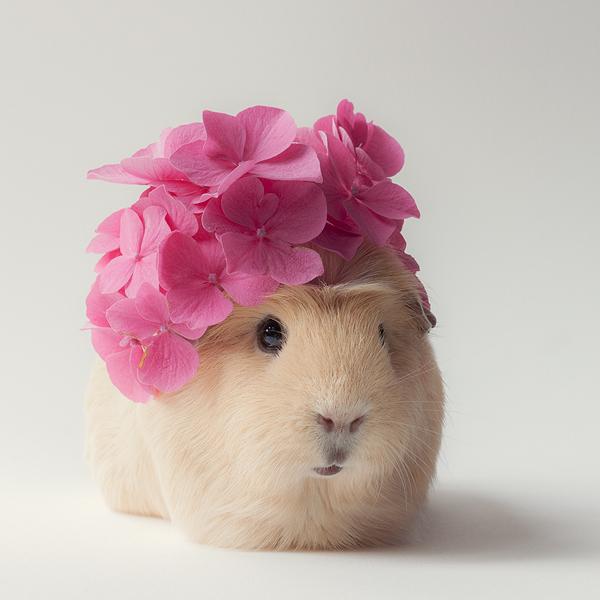 Flower lady by lieveheersbeestje