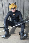 Chat Noir- This black cat just crossed your path