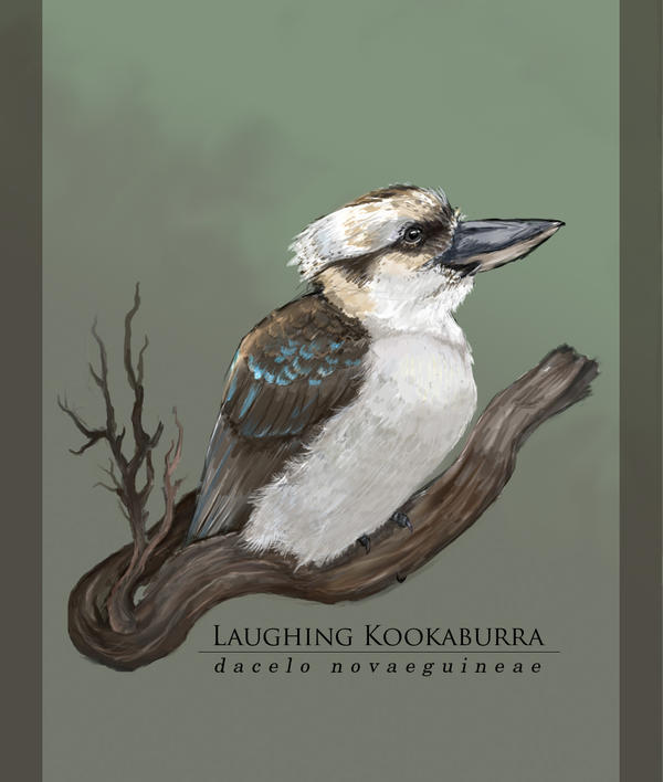 Kookaburra by Anaxi