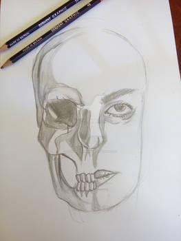 Skull and face