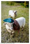 Pirate Sheep by StrawBeth