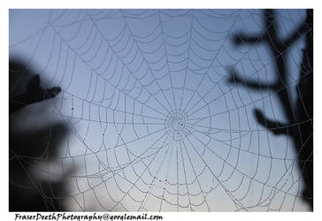 Web of Droplets