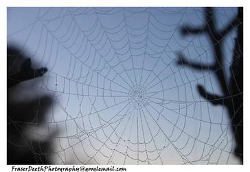 Web of Droplets by StrawBeth