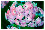Pretty Pink things by StrawBeth