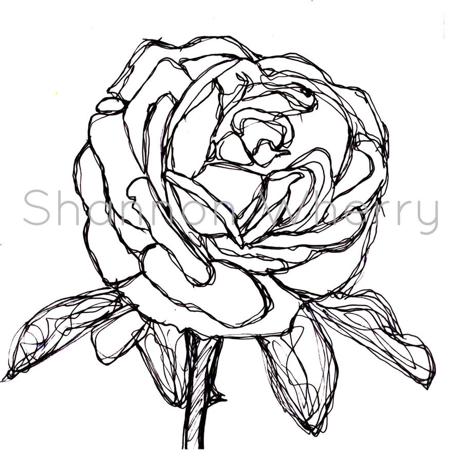 Line Drawing Of Rose Plant : Rose drawn by continuous line shanwherry on deviantart