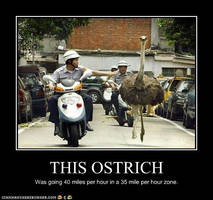 'Ostrich' Poster by Lil-Spreck1996