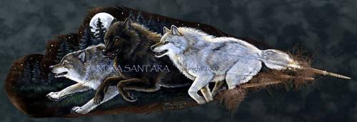 Moonlight Run by ssantara