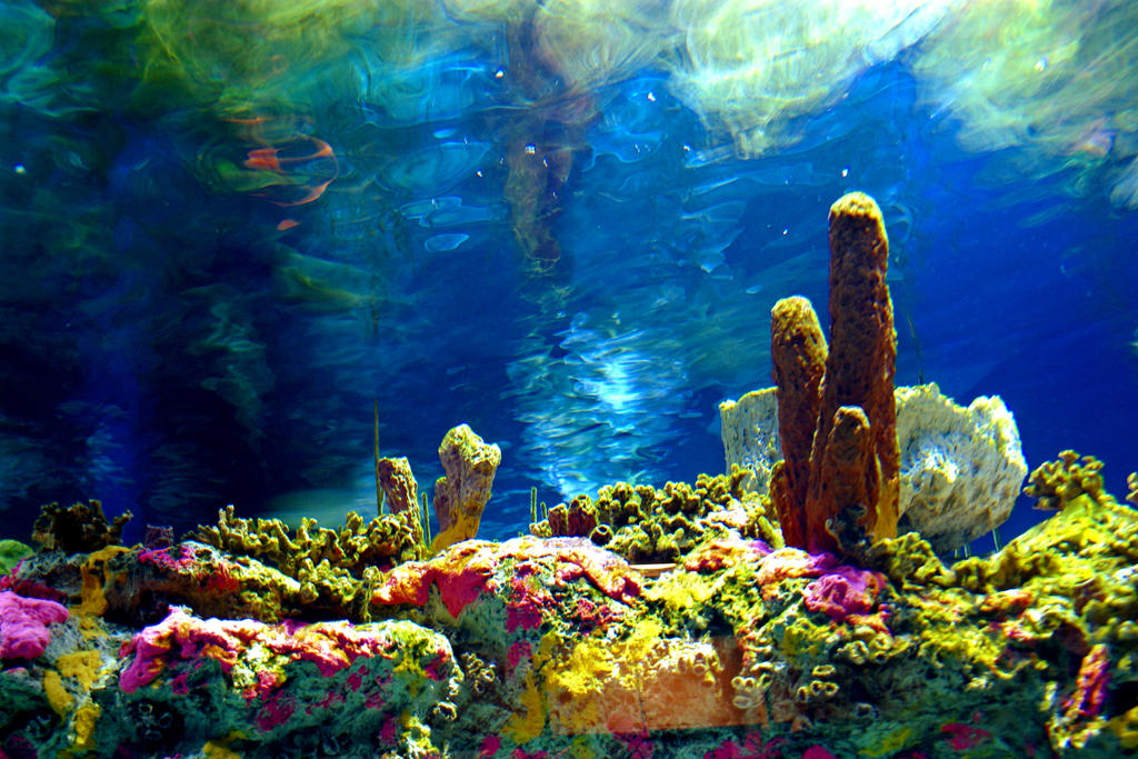 Coral Reef by MyLaundryStinks on DeviantArt Hd Wallpaper 1920x1080 Rare