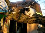 Tom and Kitty by YukisYuuki