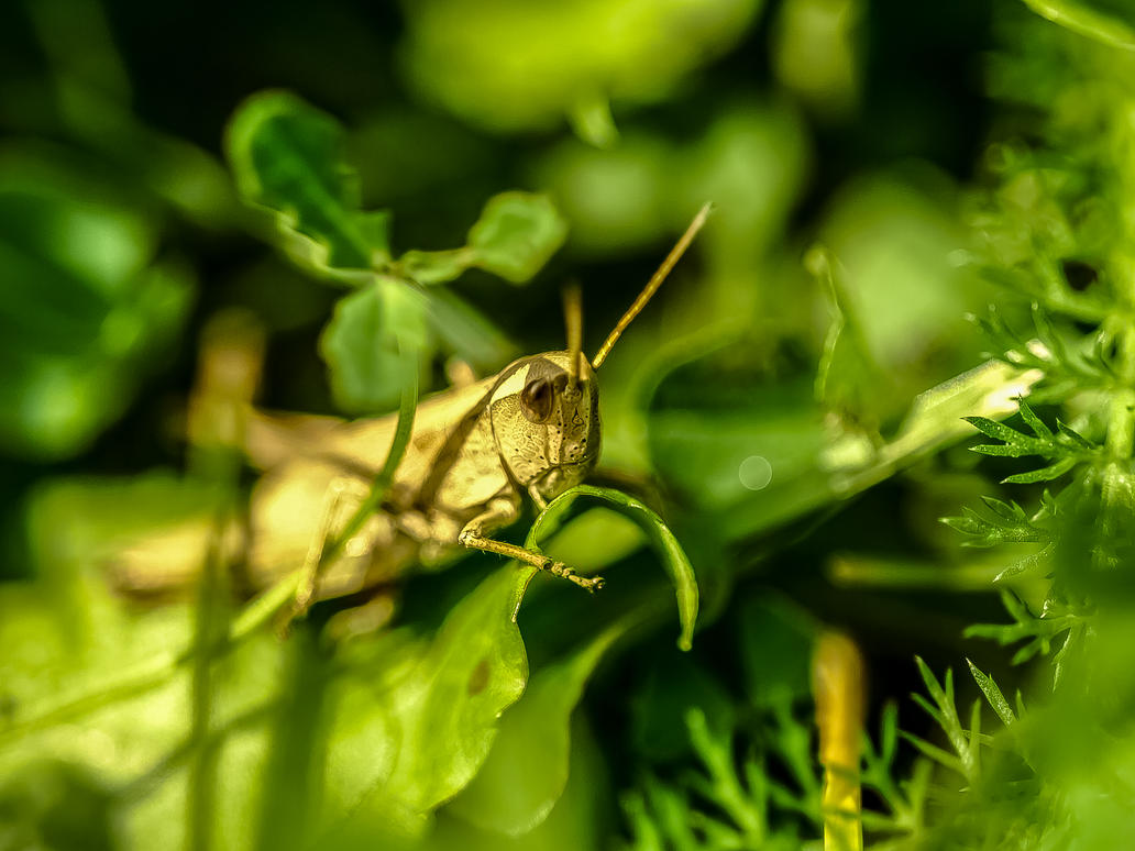 The little green Grasshopper by Laama-Harakas