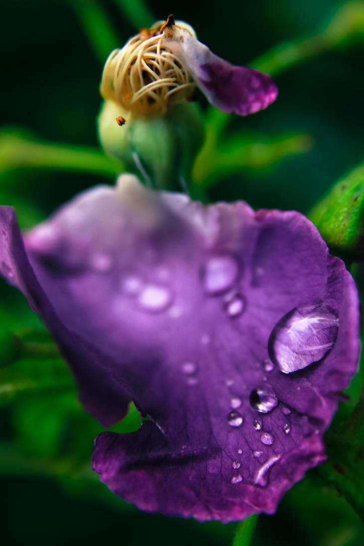 Raindrops by Laama-Harakas