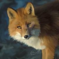Pretty red Fox - UPDATED