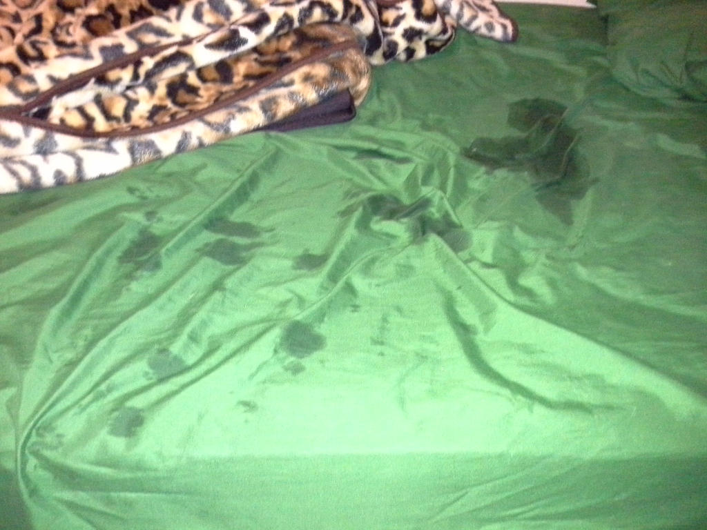 My Dog Peed On My Bed By Dannabit On Deviantart
