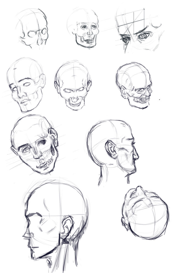 Study-heads by IRCSS