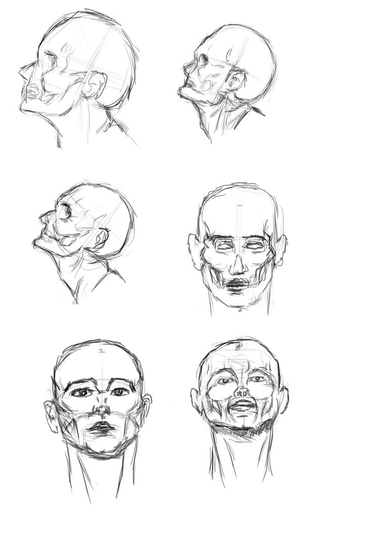 Heads study #3 by IRCSS